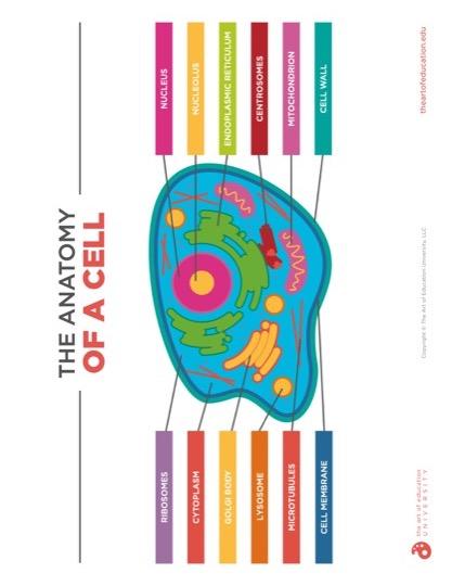 https://artofed-uploads-prod.nyc3.cdn.digitaloceanspaces.com/2019/12/55.2-AnatomyOfACell.pdf