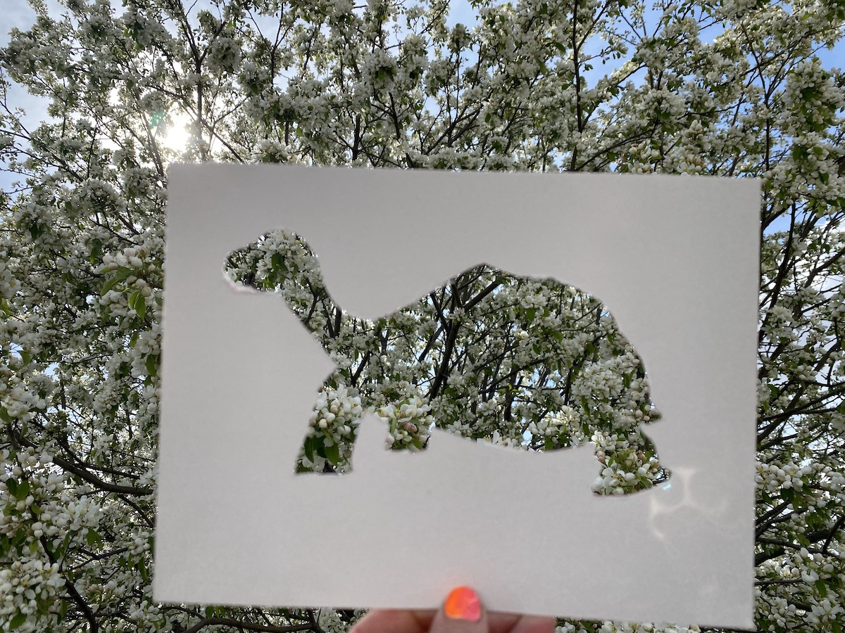 cut out of a turtle held up to a tree
