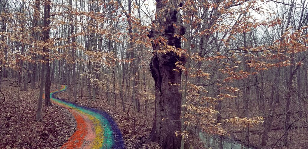 photo of woods by chelsea dipman with rainbow pathway drawn on top