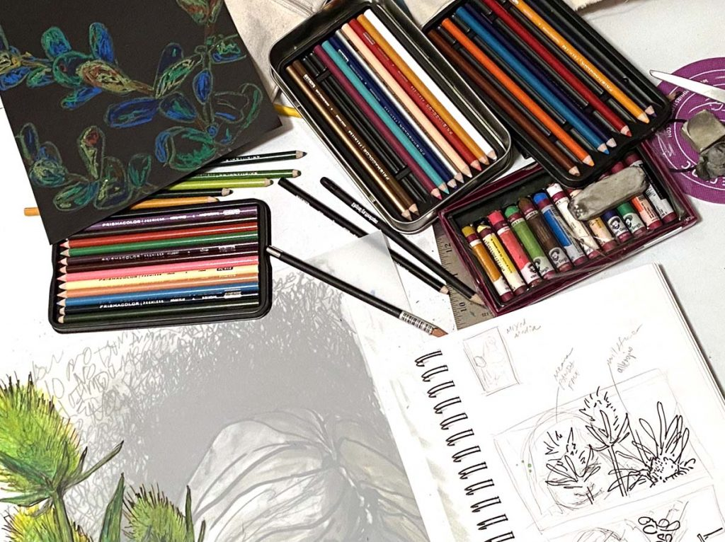 colored pencils with open sketchbook plant drawing